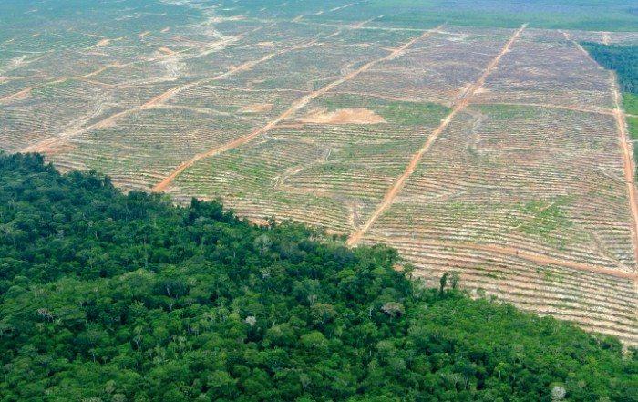 Regenwald Panoramaaufnahme