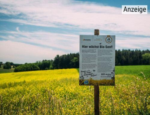 Senfbienen für die Artenvielfalt: Münchner Kindl Senf setzt sich mit Partnern für Bienen ein