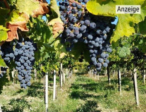 Wein nach 2000 Jahre alter Tradition