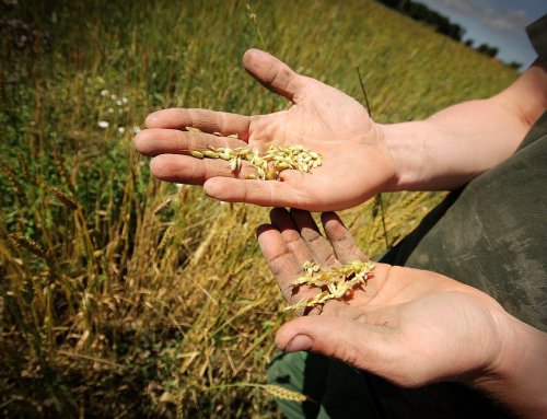 Nachhaltige Ernährung für mehr Lebensqualität