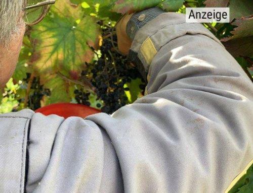 Naturweine  nach antikem Vorbild
