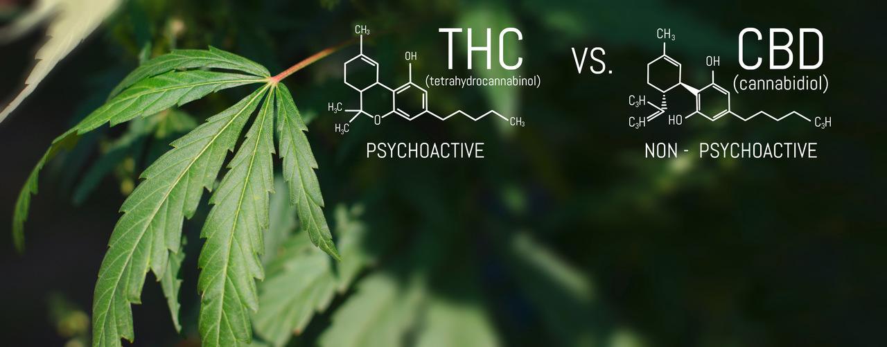 Chemische Darstellung von CBD und THC im vergleich zeigen die Unterschiede