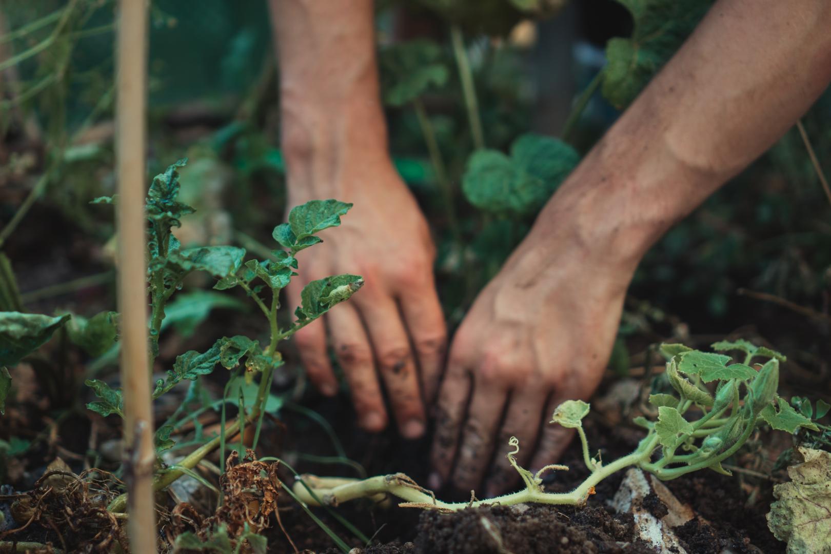 Hände bei der entspannenden Gartenarbeit