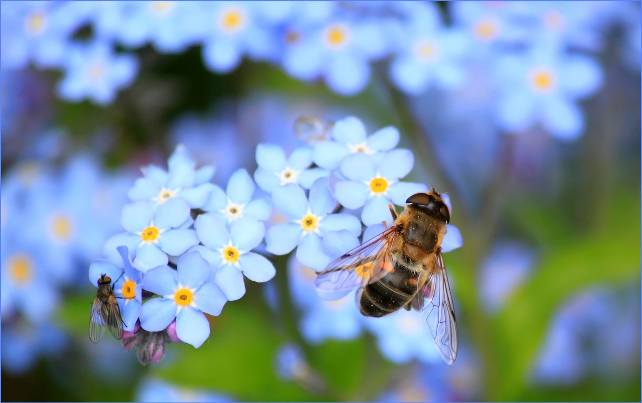 Biene sitzt auf hellblauer Blüte und symbolisiert Artenvielfalt für Umweltschutz