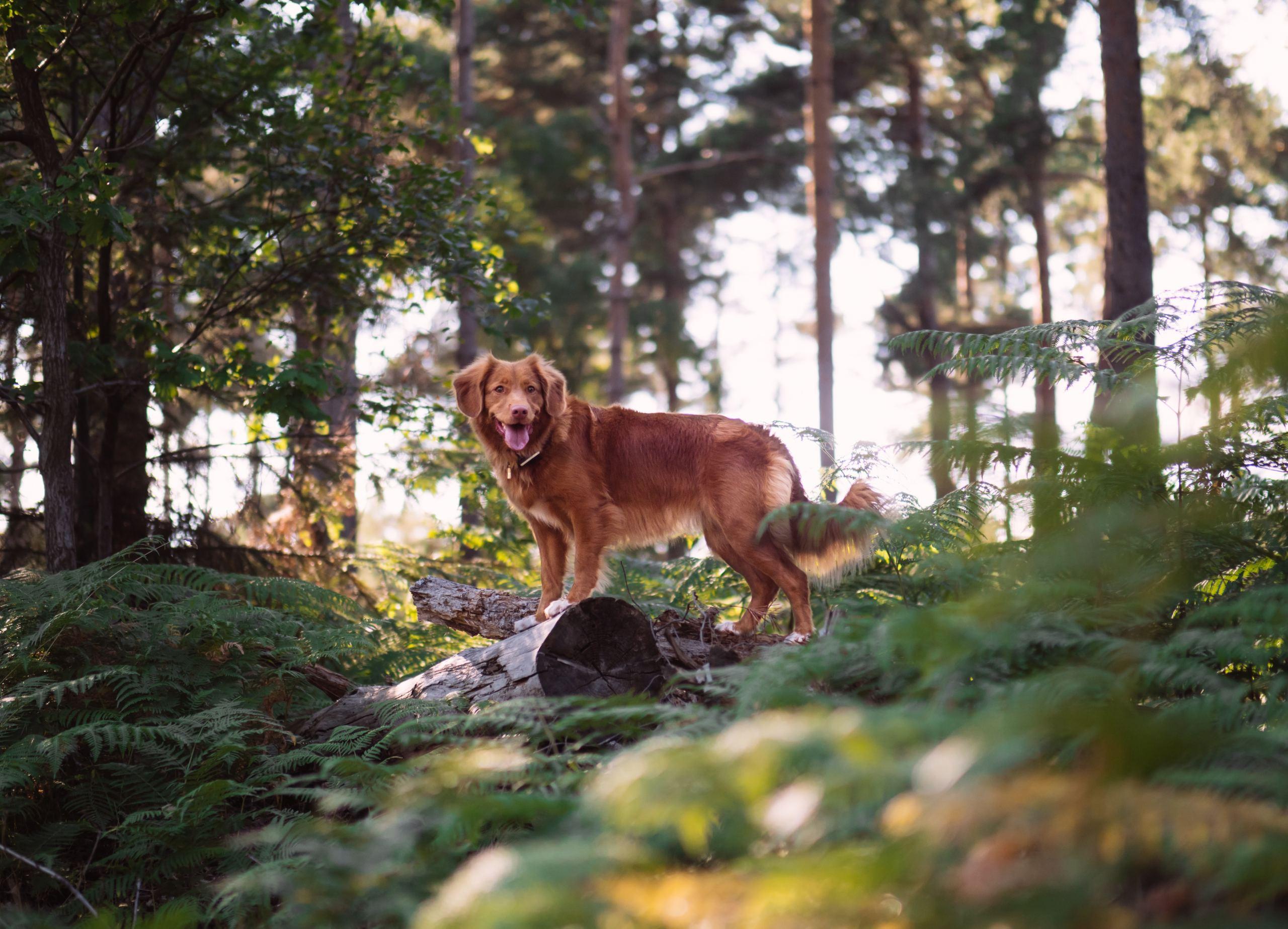 Hund im Wald ohne Leine