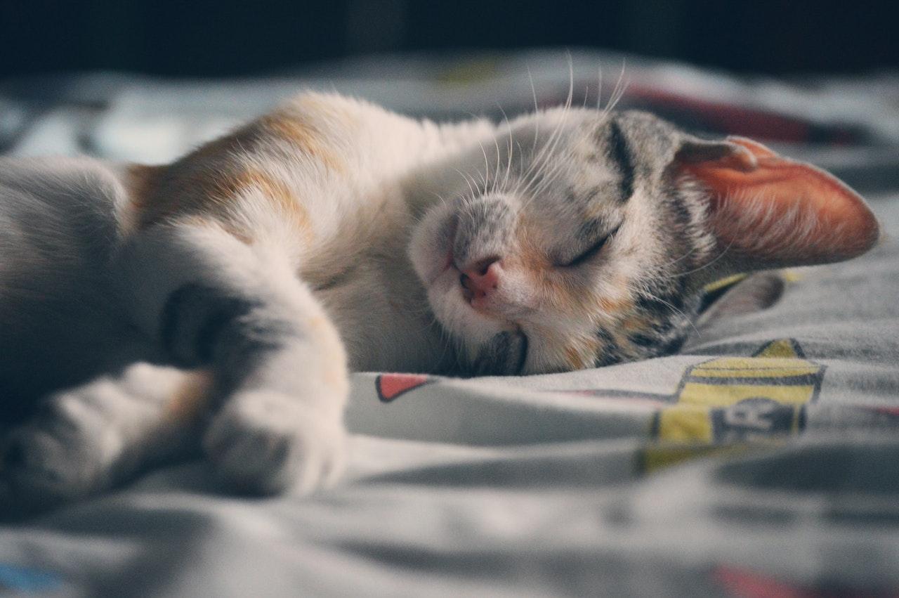 Schlafende Katze mit hellem Fell auf einem Bett symbolisiert Achtsamkeit und Entspannung