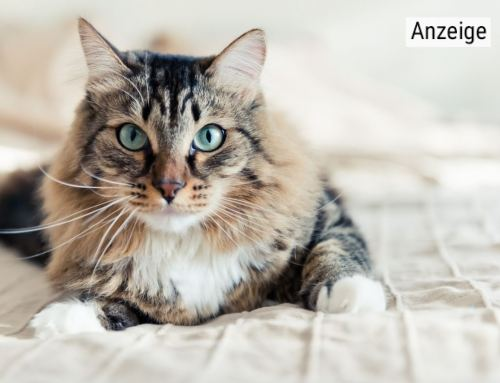 Kerngesunde Katzen  mit Futter von Happy Cat