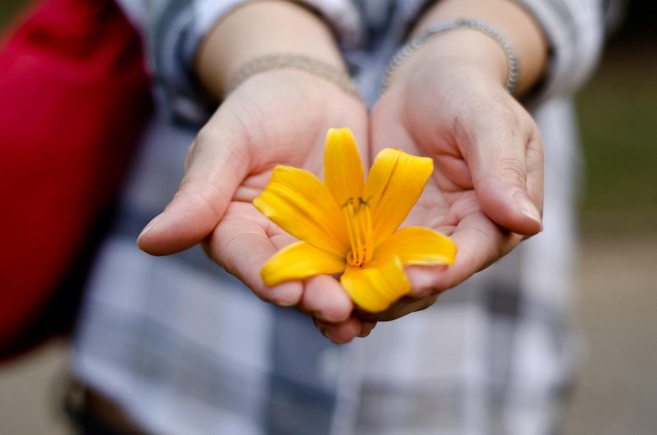 Nachhaltigkeit in Unternhemen wird in diesem Bild durch eine zarte, gelbe Blüte mit länglich-oval geformten Blütenblättern symbolisiert, die von Frauenhänden, die zu einer Schale geformt sind, gehalten wird.