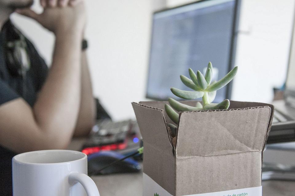 Im Hintergrund erkennt man eine männliche Person am Arbeitsplatz mit Computer-Tastatur, Computer-Maus und einen Bildschirm, während man im Vordergrund ganz deutlich eine weiße Kaffeetasse und ein kleines Paket, aus dem eine grüne Sukkulente, die Ähnlichkeit mit einer Schmucktanne hat, wächst.