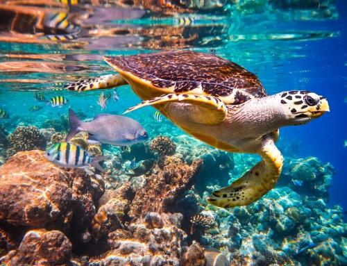 Rettet die Ozeane!  Jeder kann etwas tun