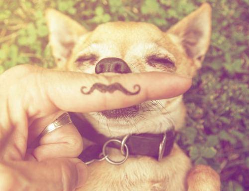 Hitzetipps für Tiere – Hilfe für Katze und Hund