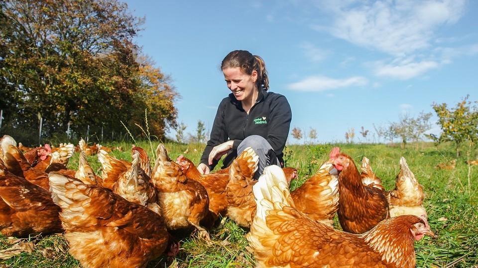 Auf einer grünen Wiese kümmert sich die Landwirtin des Biolandhofs Sandrock um ihre Hühner.