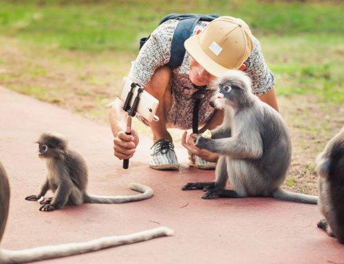 Tipps für einen Urlaub ohne Tierleid