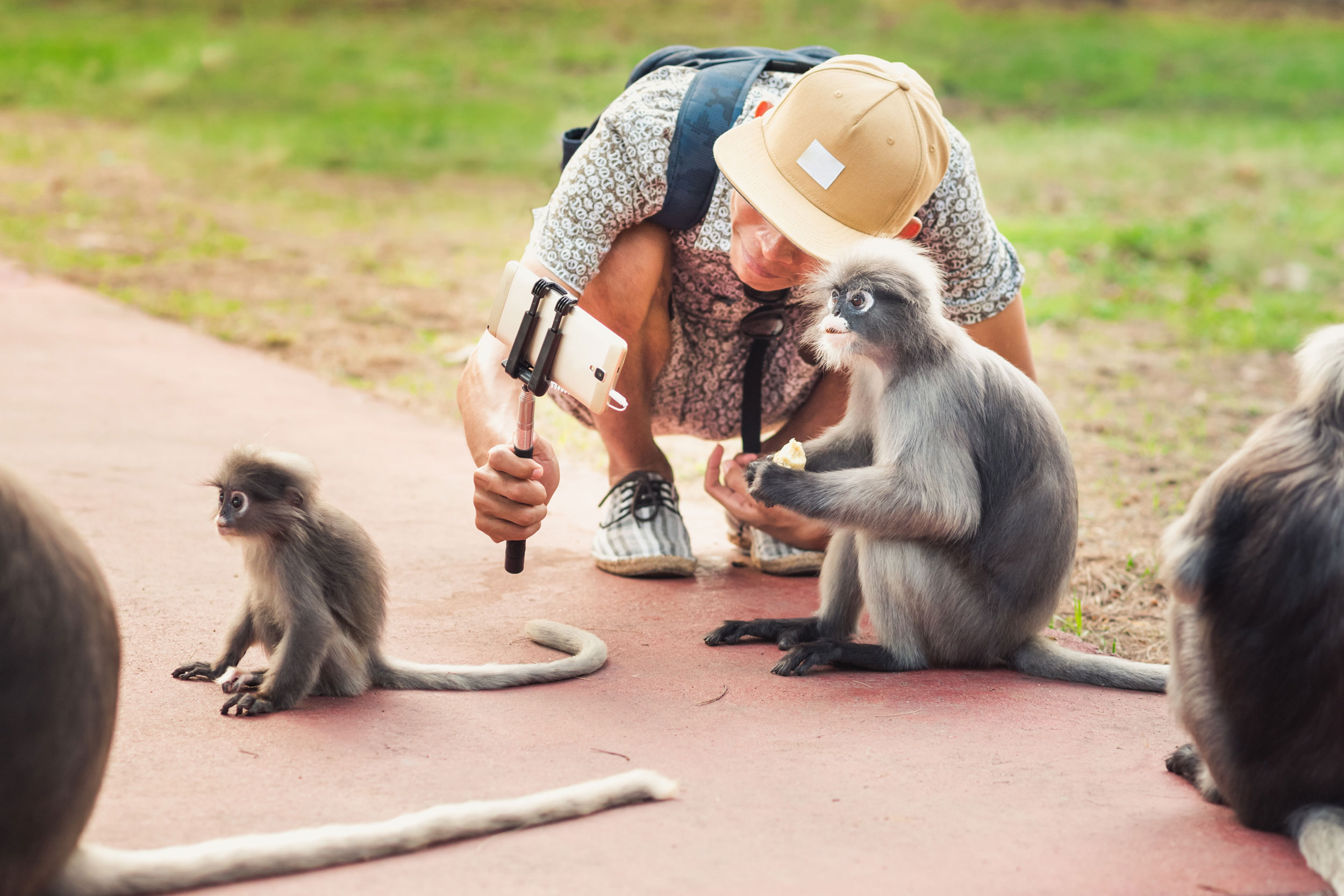 Tourist macht Selfies mit Affen