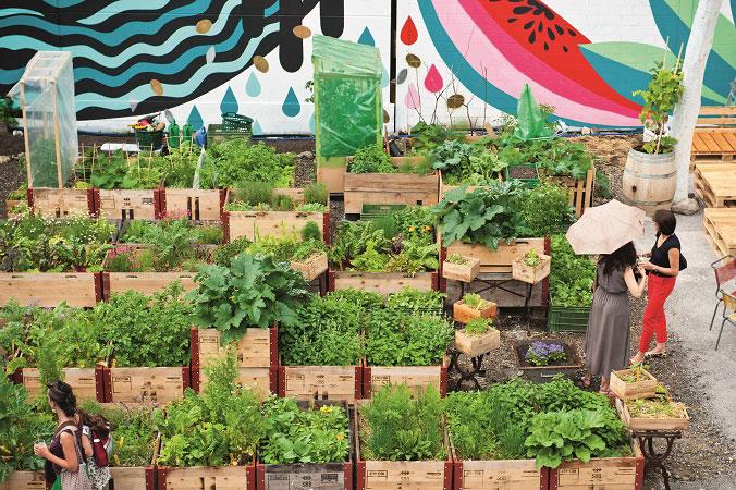 In Reihen aufgestellt zeigen die Hochbeete bei Frau Gerold in Zürich frische Kräuter wie Koriander, Salate oder Rhababerstauden und präsentieren sich in verschiednen Grüntönen.