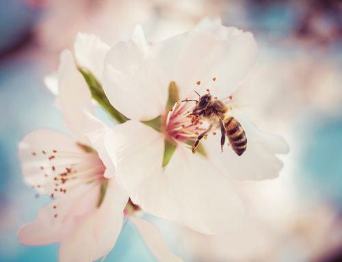 Ein Garten für Bienen:  so klappt's!