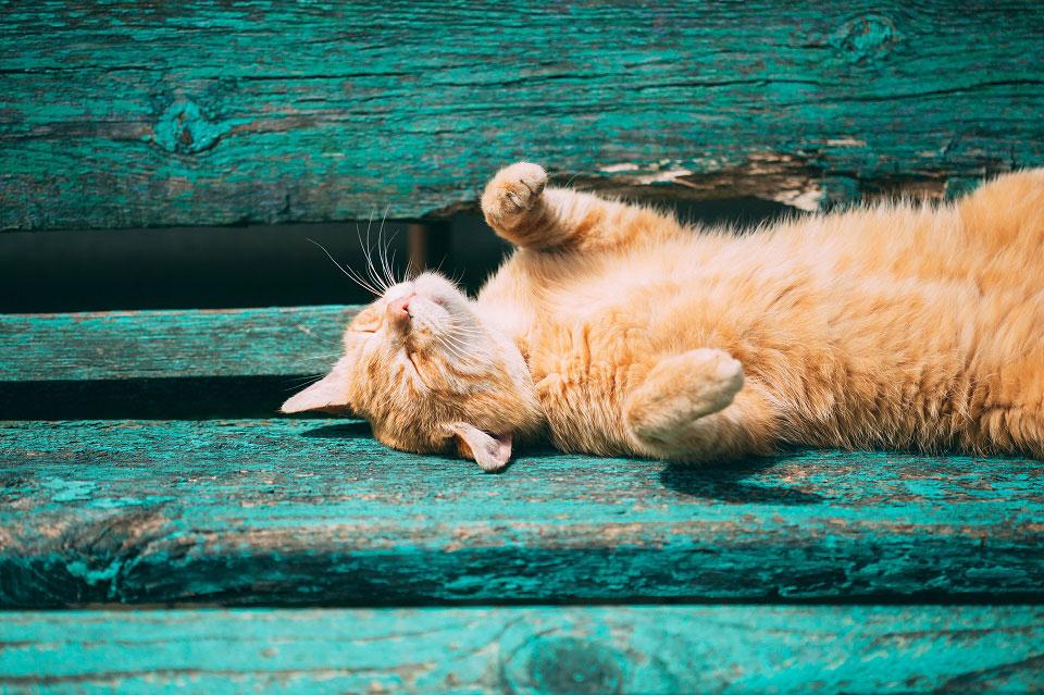 Auf einer grün gestrichenen Holzbank liegt eine orange getigerte Katze in der Sonne und genießt sichtlich die warmen Strahlen.