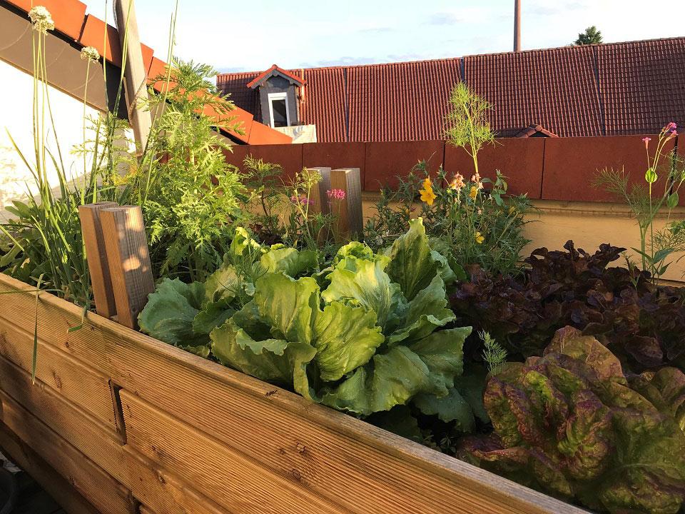 Frühjahrstipp Gemüse Auf Dem Balkon Anbauen Green Lifestyle Magazin