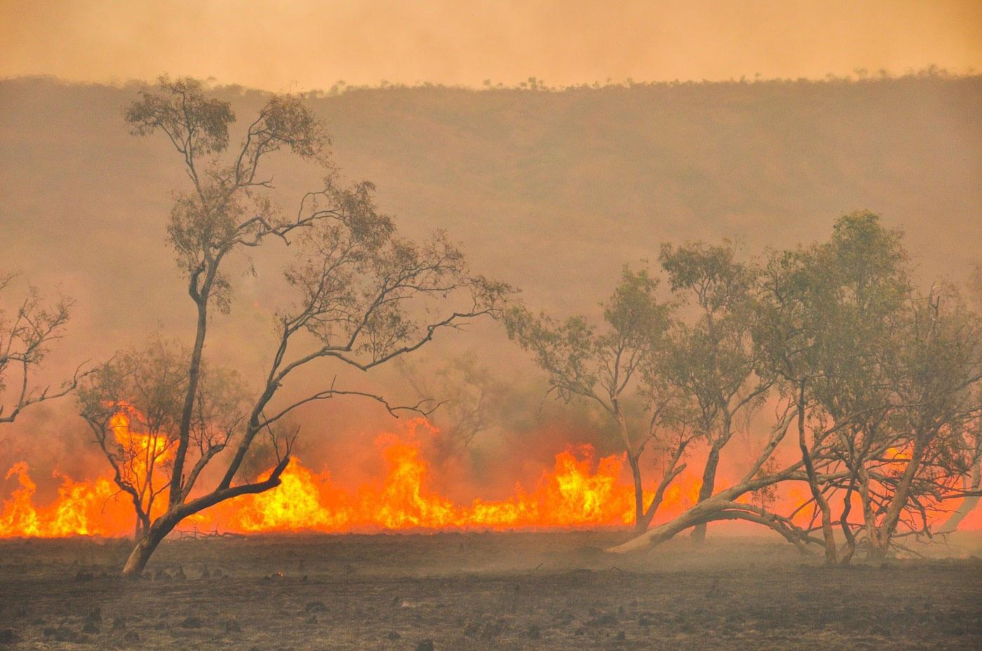 Brennende Landschaft bei dem Feuer in Australien