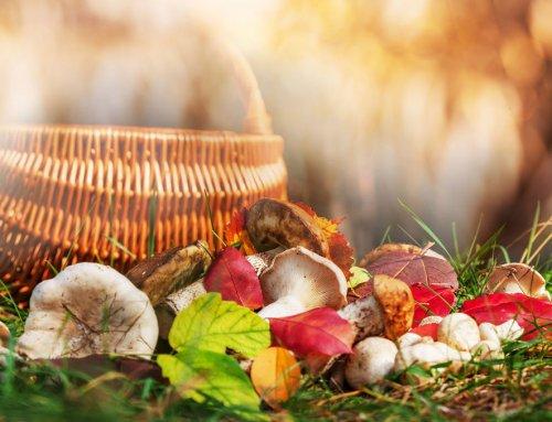 Spontan Vegan: Lecker kochen mit Pilzen!