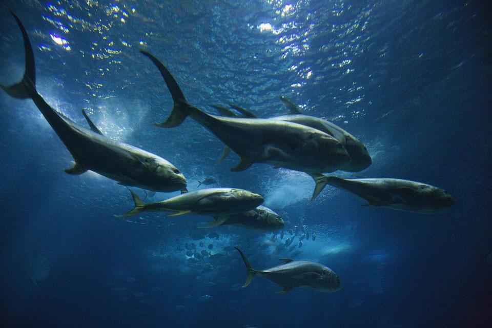 Die Oberfläche unseres Planeten besteht zum Großteil aus Wasser und bietet Lebensraum für unzählige Lebewesen. © Iofoto / Shutterstock