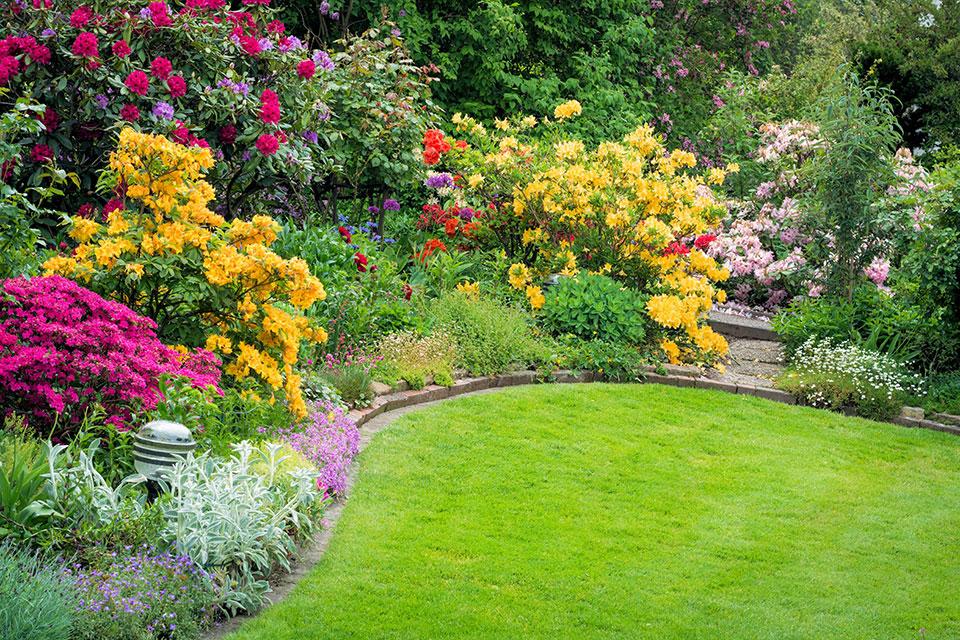 An akkurat getrimmten Rasen grenzt ein buntes Blumenbeet mit gelben, pinken und weißen Blüten, die Bienen, Hummeln und andere wichtige Insekten mit Nektar versorgen.