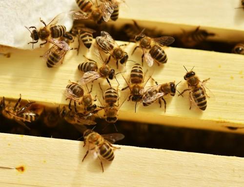 Auf Streife: Die Bienen der Münchner Polizei