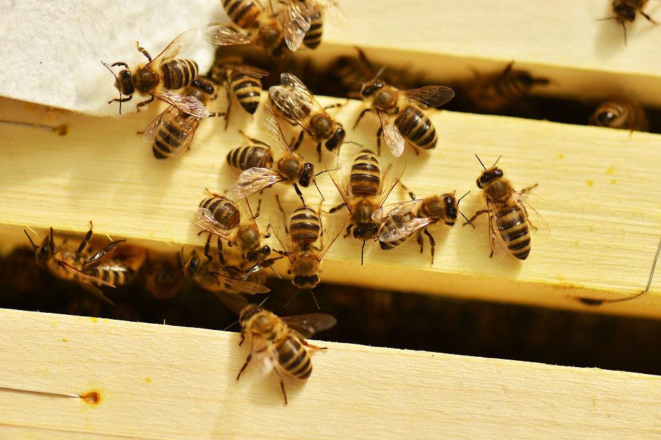 Ein Bienenschwarm