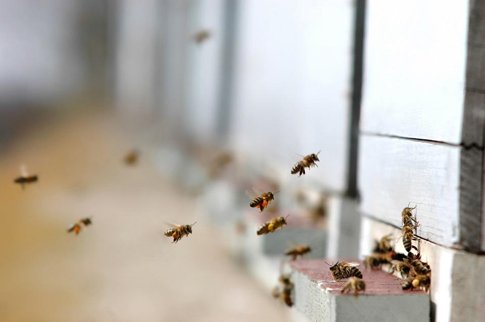Ein Schwarm fliegender Bienen