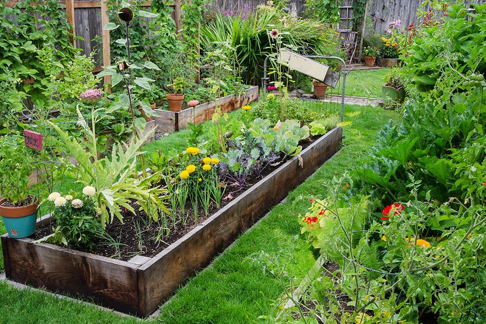 In einem niedrig angelegten Hochbeet wachsen heimische Wildblumen wie Löwenzahn, Sonnenblumen und Dahlien zwischen frischem Salat.