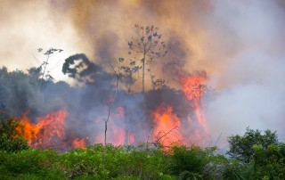 Meterhohe Flammen und dunkel Rauchwolken steigen aus dem Regenwald im Amazonasgebiet hervor und hinterlassen verbrannte Erde.