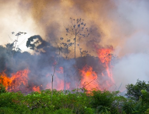 Feuer im Amazonas-Regenwald