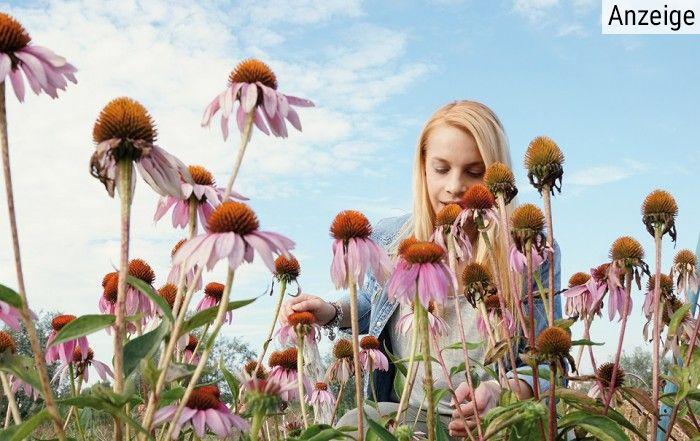 Eine blonde Frau steht in einem Feld voller Sonnenhutpflanzen, auch Echinacea purpurea genannt, und erfreut sich an dem Duft der Heilpflanze.