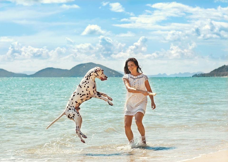 Ein Dalmatiner spielt mit seinem Frauchen an einem heißen Sommertag im Wasser.