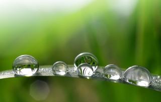 Auf einem saftiggrünen Grashalm haben sich mehrere Wassertropfen gebildet, in denen nun das Sonnenlicht sowie die verschiednen Grünnuancen brechen.