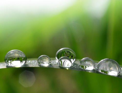 Alternative Medizin: Mehr Wohlgefühl mit Bachblüten