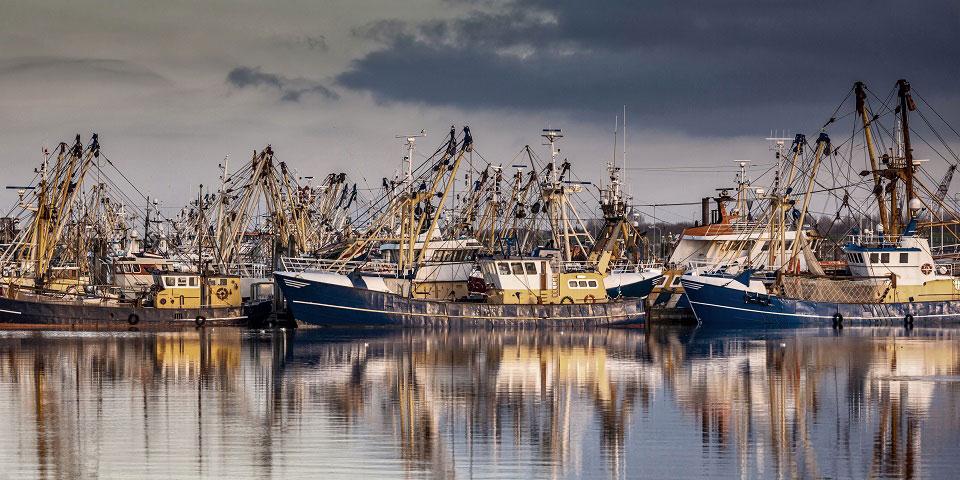 Eine große Zahl an Fischerbooten liegt im Hafen Lauwersoog, der eine der größten Fischfang-Flotten der Niederlande innehat.