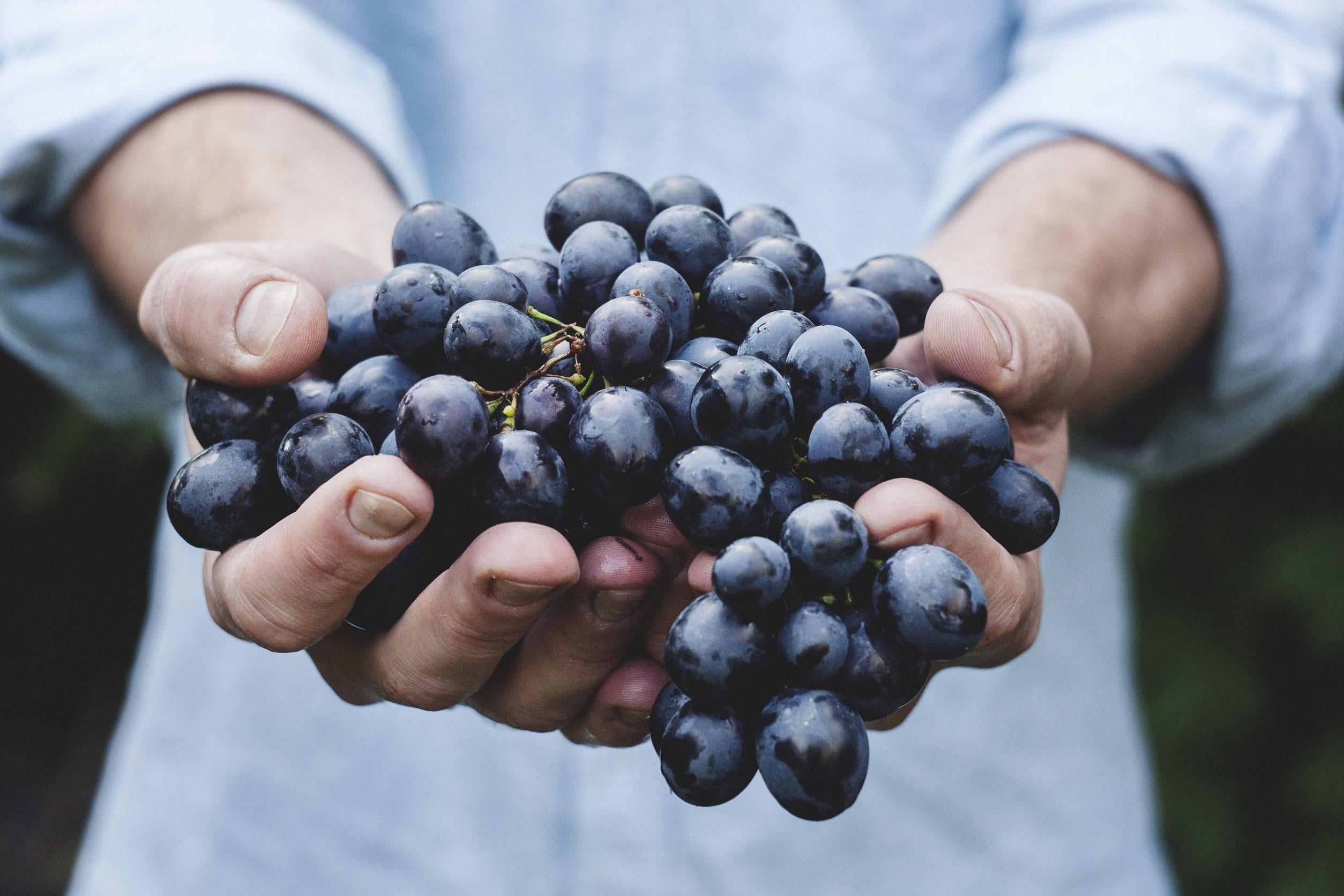 Trauben sind zar nicht ewig haltbar, wie alle Lebensmittel aber zu gut für die Tonne
