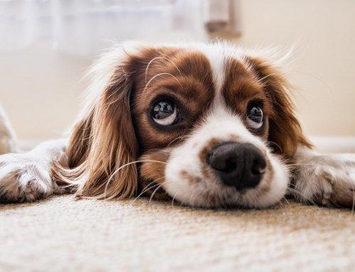Gassi-Pflicht: Das soll sich für Hunde ändern