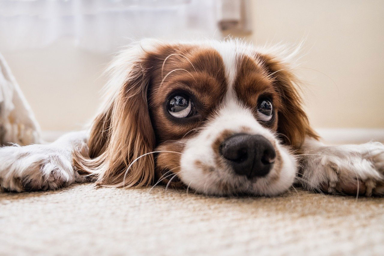 Hund wartet auf Gassi