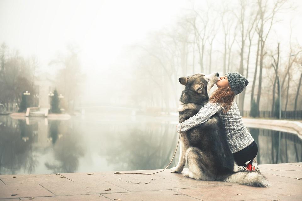 Im Herbst ist Fellpflege für Hunde besonders wichtig. Foto © Pavel Ilyukhin / Shutterstock