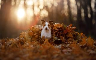 Richtige Hundepflege im Herbst hält unsere Vierbeiner gesund. Foto © dezy /Shutterstock