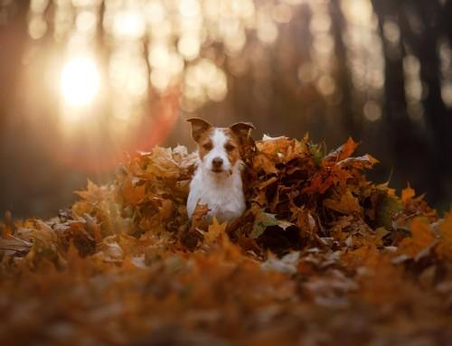 Hundepflege im Herbst