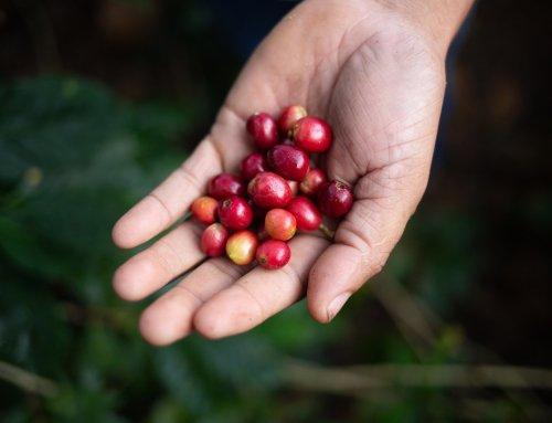 Gutes tun mit gutem Kaffee: Impact-Bohnen von Café Royal