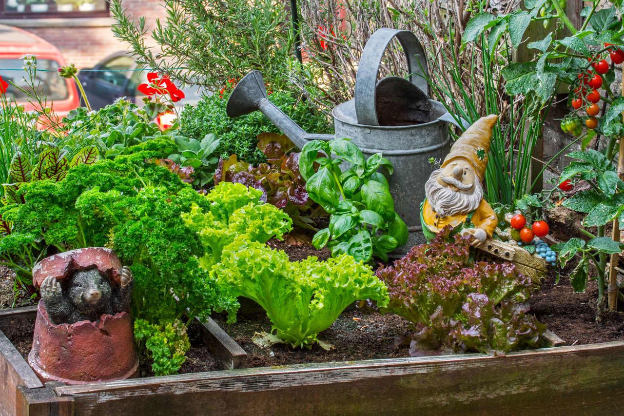 Kleines Beet auf dem Balkon mit Gartenzwergen