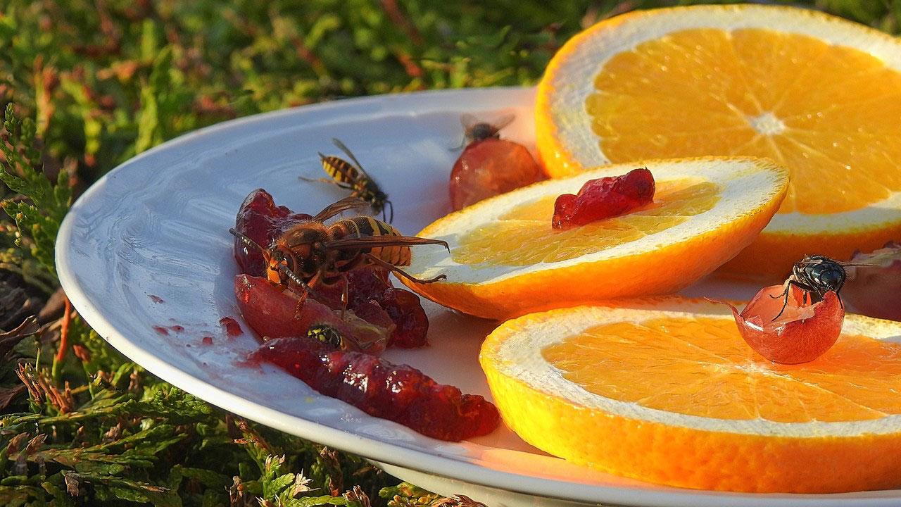 Obst und Marmelade steht in der Gunst von Wespen ebenfalls ganz weit oben