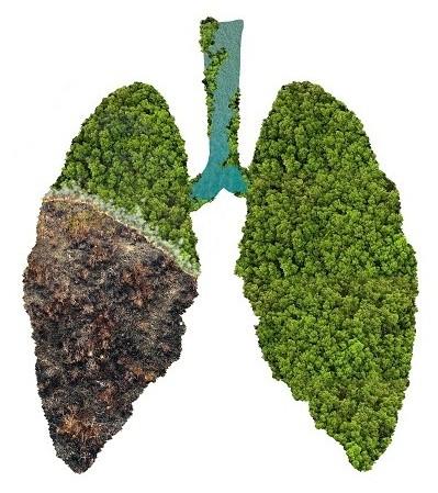 Die Luftaufnahme des Amazonas-Regenwaldes wird in Form einer grünen Lunge dargestellt, deren linker Lungenflügel zu Dreivierteln verbrannt ist, was die Bedeutung des Gebietes für die gesamte Erde veranschaulichen soll.